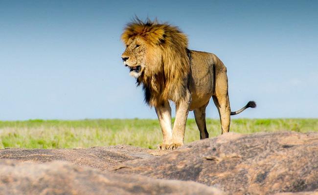 10 Day Tanzania Safari Tour