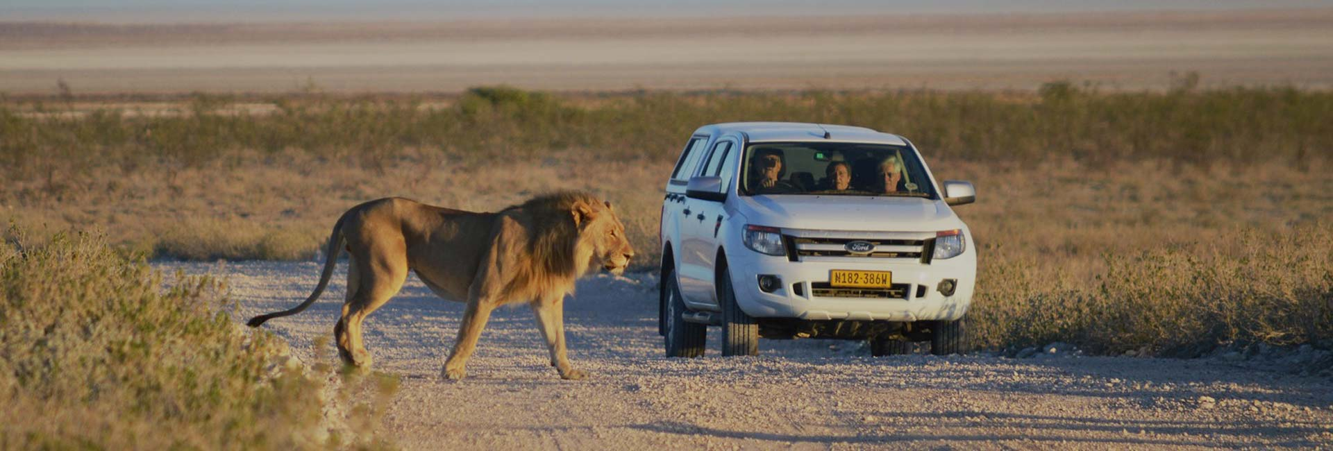 Self Drive tours Safari