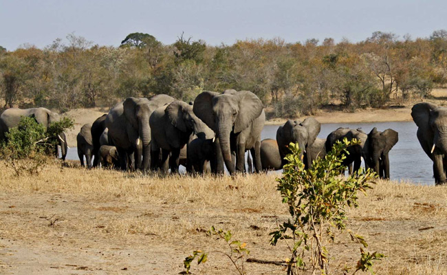 Kruger camping Safari tours