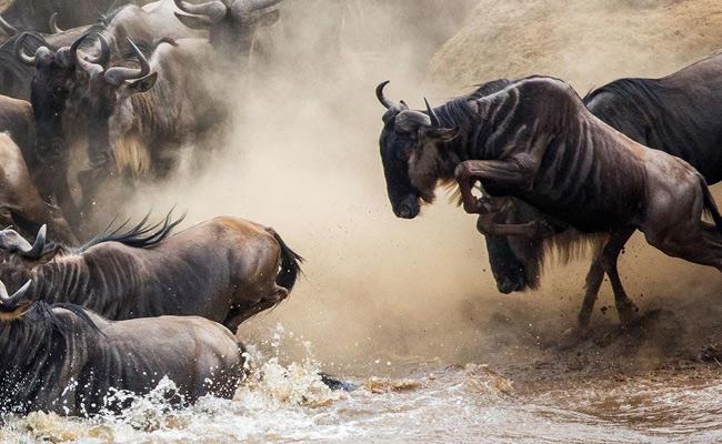5 Day Wildebeest Migration Safari in Tanzania