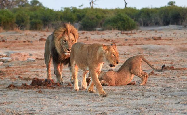 Victoria Falls & Chobe National Park tours and safaris