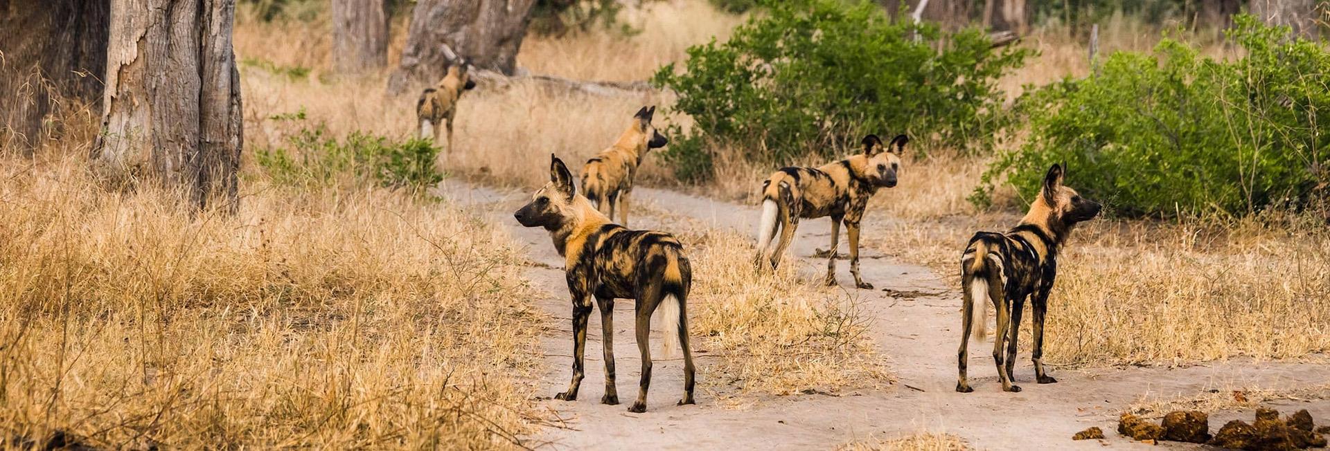 7 Night Green Desert Botswana Safari