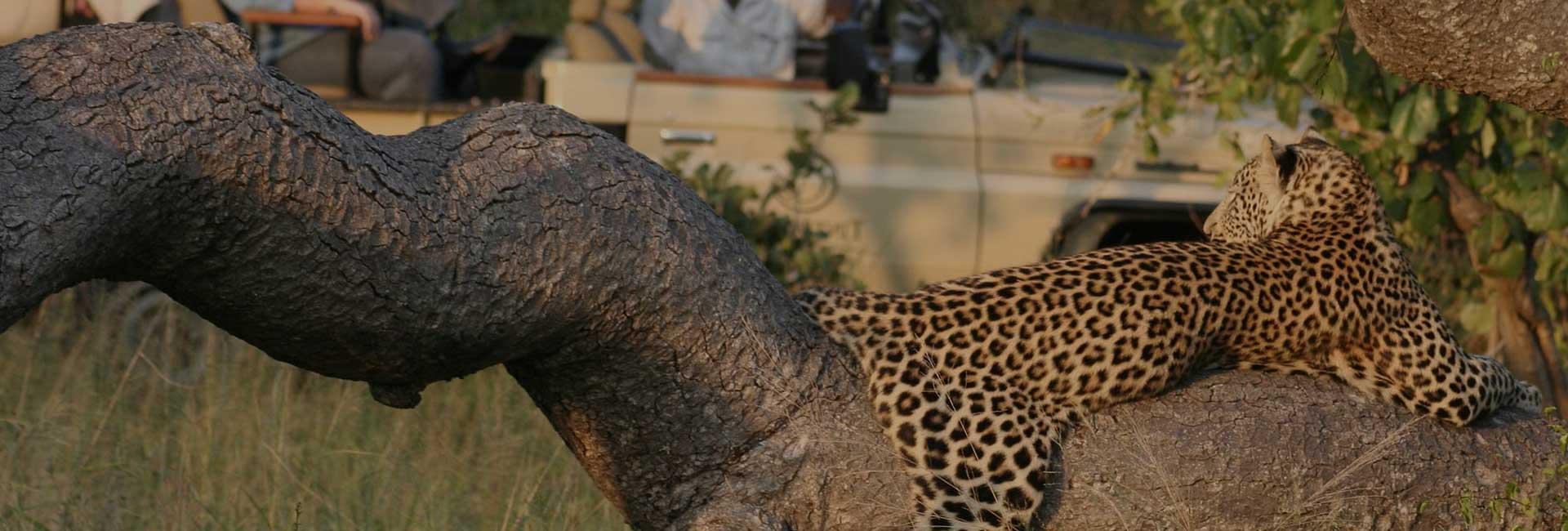 9 Days South Africa Budget Safari