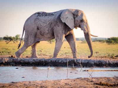 Zambia Classic Safari
