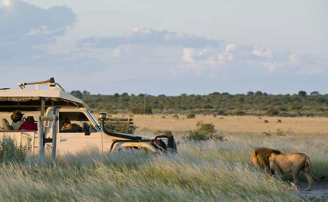 7 Night Green Desert Botswana Safari