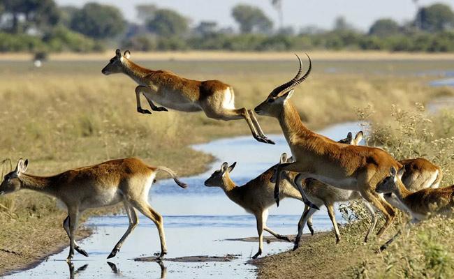 9 Days Victoria Falls to Okavango Delta