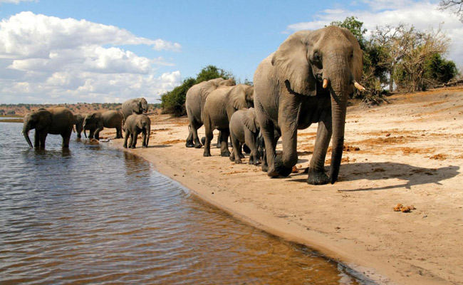 Victoria Falls to hwange & Chobe safaris
