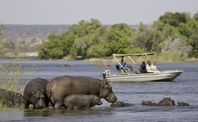 Chobe Day safari