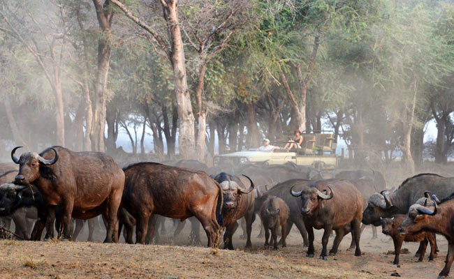 8 Days Zambia Classic Safari
