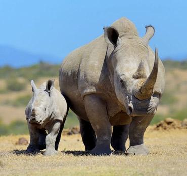 Matobo National Park Day Trip