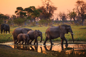 Zambia Wildlife