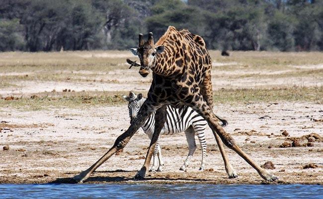 Hwange tours and safaris
