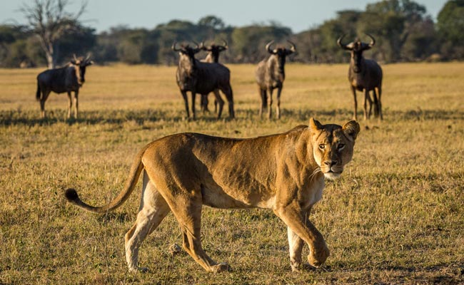 victoria falls tour packages
