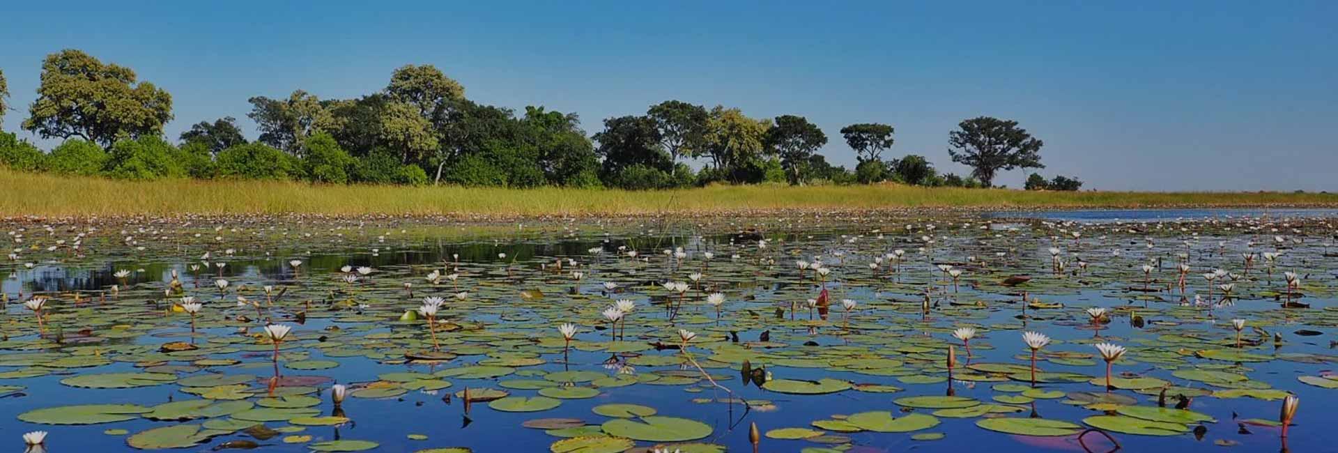 Okavango Delta Day Trip