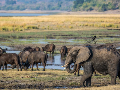 Victoria Falls & Chobe National Park Safari