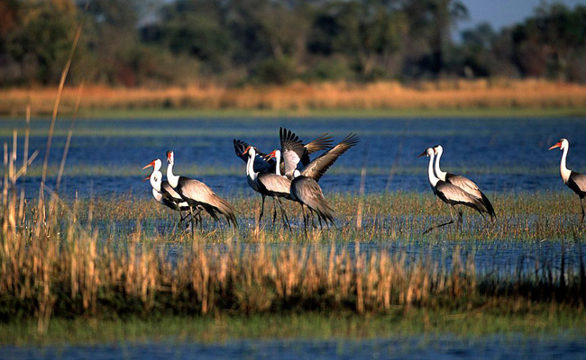 Moremi game reserve day trip