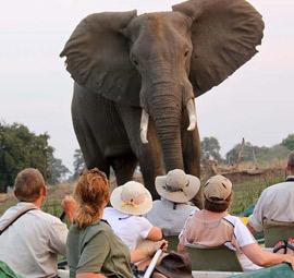 Highlights Safari
